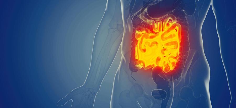 Ingrid Febbraro - Microbiota intestinale